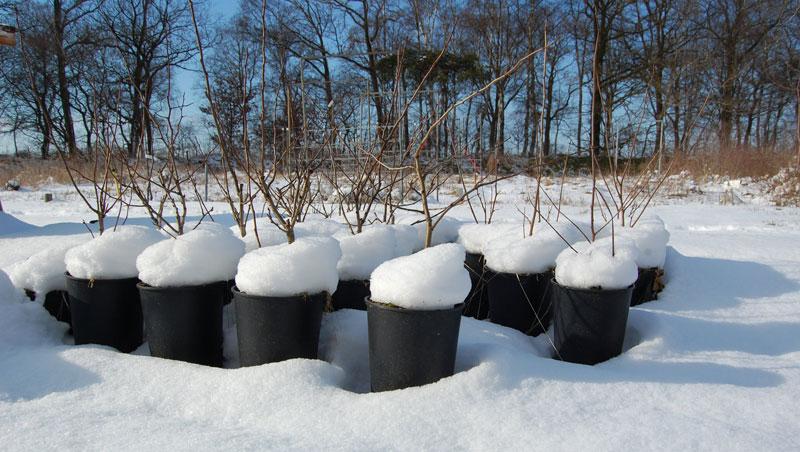 Gärtnerei-im-Schnee
