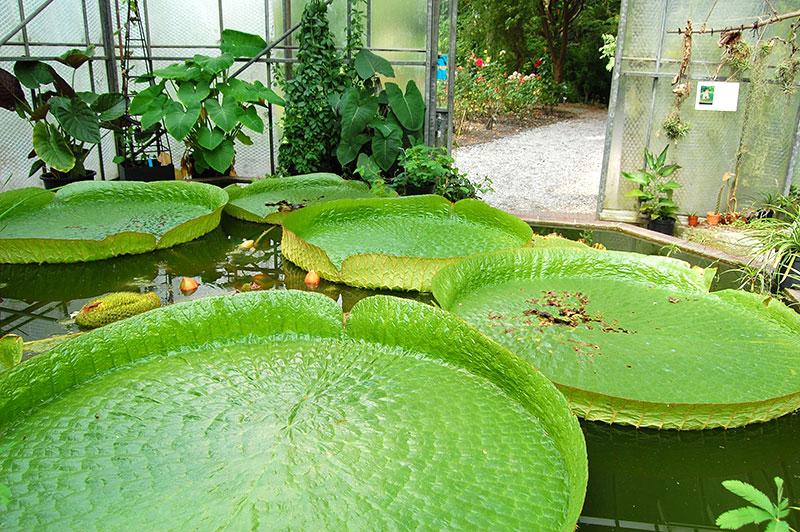 Botanischer Garten Wilhelmshaven Gartenrot Blog