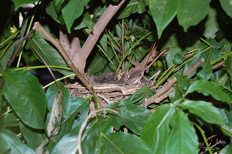 Nestlinge