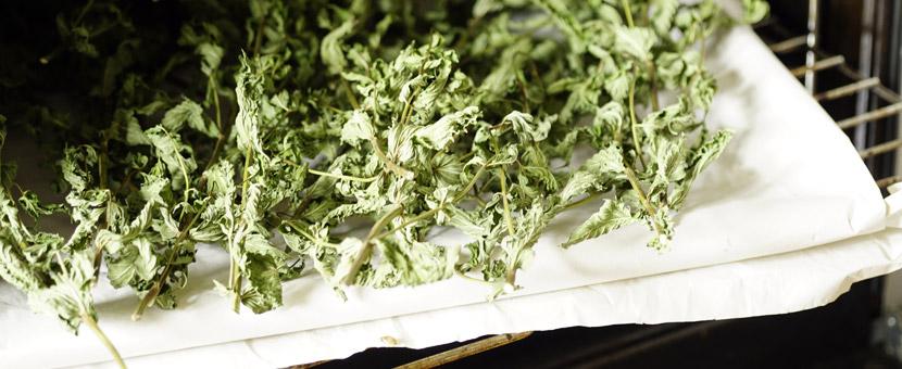 getrocknete Blätter im Backofen