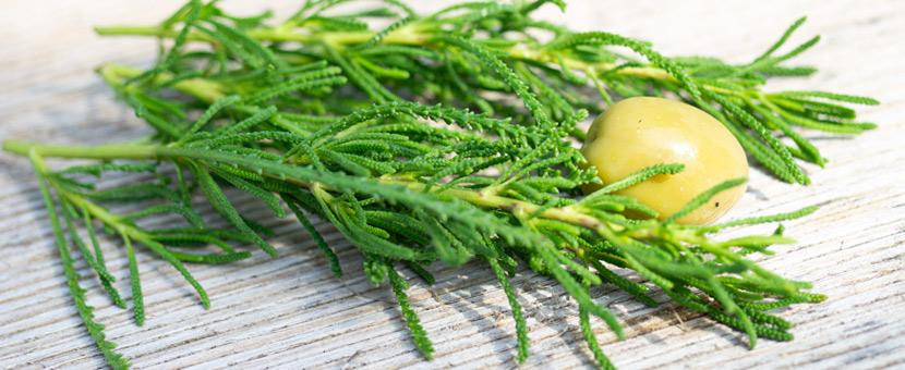 Olivenkraut mit Olive