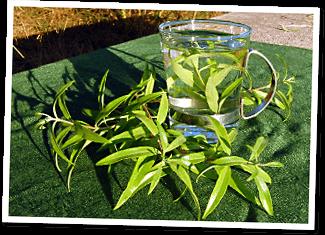 Gärtnerei Gartenrot Duftpflanzen Im Garten Blumen Krauter