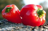 Chili und Paprika