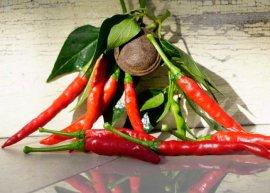 Chili Hot Thai Red (Saatgut)