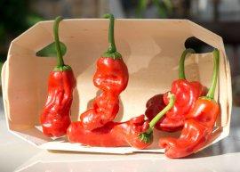 Chili Peter Pepper/Penis Pepper (Saatgut)