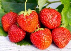 Erdbeere 'Königin Luise' (Pflanze)