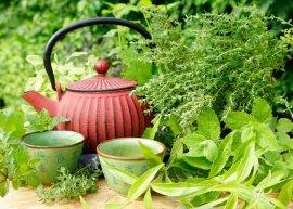 Teekräuter (Pflanzenpaket)