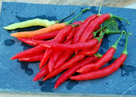 Chili Piri-Piri (Saatgut)