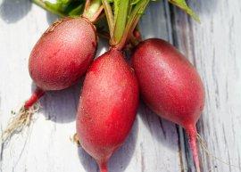 Radieschen 'Cherry Belle' (Saatgut)