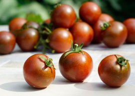 Kirschtomate 'Brown Berry' (Saatgut)