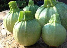 Zucchini 'Tondo chiaro di Nizza' (Saatgut)