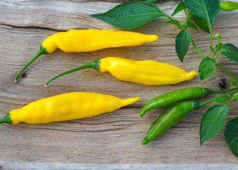 Chili Lemon Drop (Saatgut)