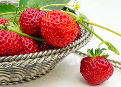 Erdbeere 'Mieze Schindler' (Pflanze)