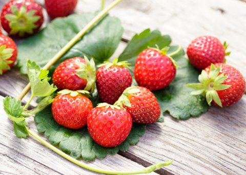 Erdbeere 'Manille' (Pflanze)
