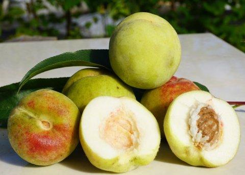 Grüner Pfirsich (Pflanze)