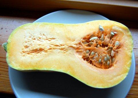 Butternut Kürbis (Saatgut)
