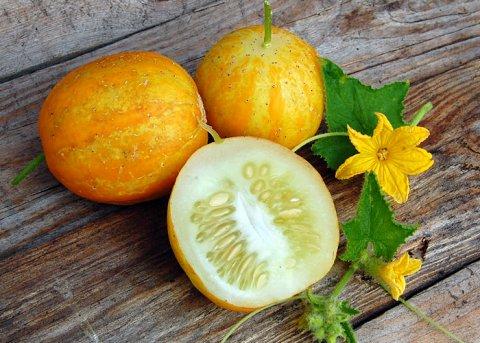Lemongurke (Saatgut)