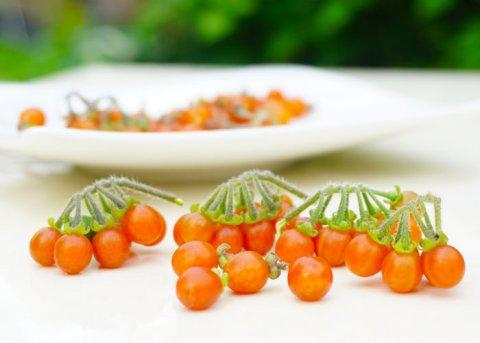 Otricoli Orange Berry (Samen)