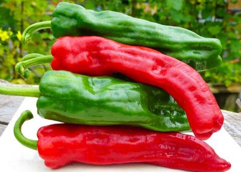 Paprika Dulce Italiano (Saatgut)