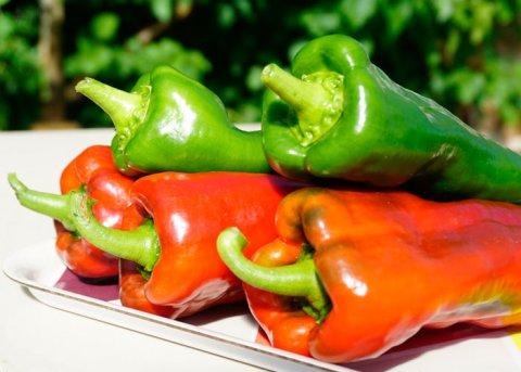 Paprika 'Pantos' (Saatgut)