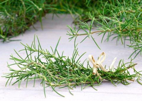 Pinienrosmarin (Pflanze)