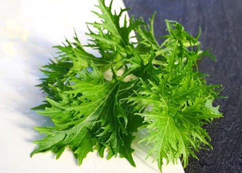 Grüner Senf (Saatgut)
