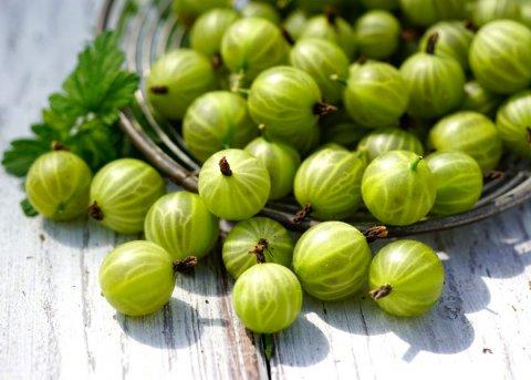 Stachelbeere 'Grüne Kugel' (Pflanze)