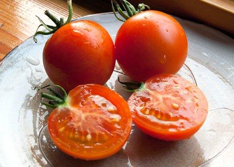 Tomate 'Auriga' (Saatgut)