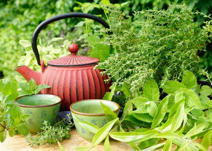 Gemeinsame Teekräuter (Pflanzenpaket) &RD_87